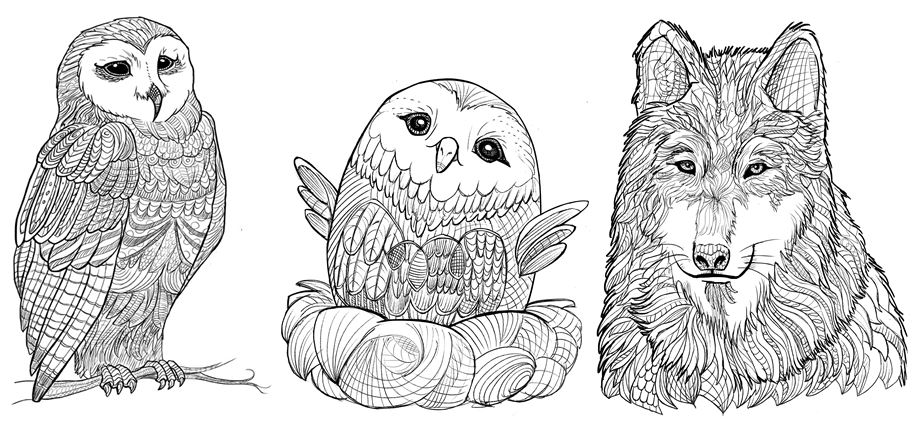 79 Amazing Animals Coloring Book